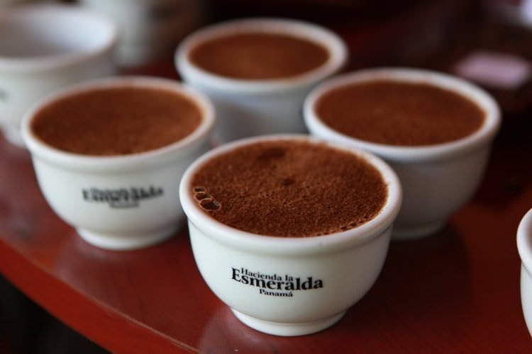 Most Expensive Coffee: Top 10 Costliest Coffees in the World